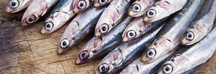 fiskekonserves_ansjoser.jpg