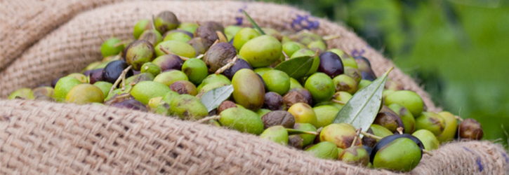 oliven.jpg